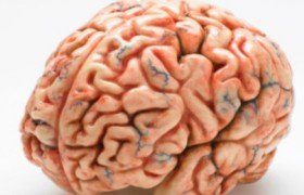 Учеными найден «черный ход» в антимикробном щите головного мозга