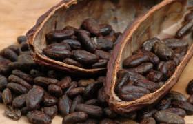Флафонолы какао полезны для когнитивной функции