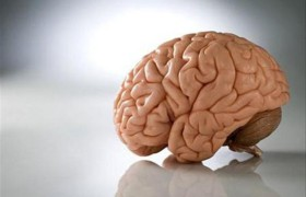 Ученые доказали, что к вечеру объем мозга уменьшается