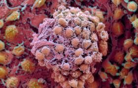 Эмбриональные клетки помогут лечить парализованных пациентов