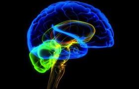 Улыбка изменяет работу нашего мозга