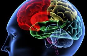 Растения вроде крокусов, нарциссов и лаванды необычным образом влияют на мозг