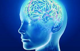 Двенадцать продуктов полезных для мозга