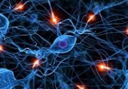 Человеческий мозг почти идеален