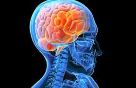 Ученые рассказали о продуктах, стимулирующих работу мозга