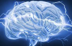 Информация хранится частями в мозге