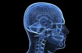 Как связаны между собой эмоции и внимание в мозге