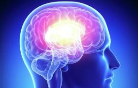 Ученые считают, что проблемы с почками приводят к заболеванию головного мозга