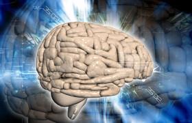 Клетки мозга взрослых содержат тысячи мутаций