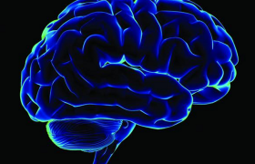 Сладкие напитки, соления и сосиски уменьшают мозг