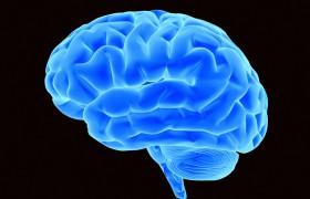 Уровень достатка сказывается на объеме мозга
