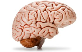 Диагностировать заболевания головного мозга будет цифровая ручка
