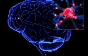 Как изучить состояние коры головного мозга: медицинская диагностика