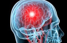 У каждой фобии есть свой участок мозга
