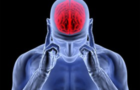 Учеба меняет структуру клеток мозга человека