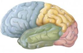 Ученые доказали, что агрессия способствует росту новых клеток в мозге