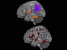 Ученые нашли области мозга, отвечающие за правописание