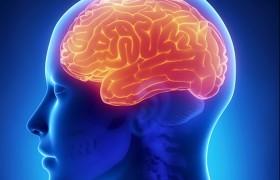 Работа мозга зависит от положения тела