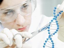 Генетики узнали, от чего зависит уровень интеллекта
