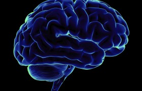 Mедитация приводит к увеличению объема мозга