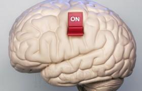 Ученые нашли в мозге нейроны для быстрого пробуждения
