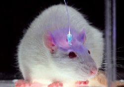 Наука близка к созданию метода восстановления памяти при болезни Альцгеймера