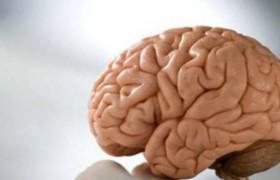 Кора головного мозга: динамичность функций