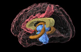 ХОБЛ может изменить структуру мозга