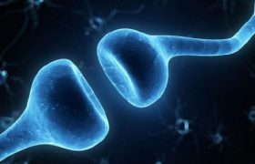 Болезнь Альцгеймера запускают наши собственные иммунные клетки