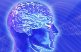 Ученые обнаружили ген старения мозга