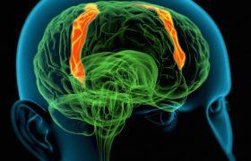 Ученые получили самую подробную карту соединений нейронов коры мозга