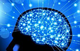 В мозге обнаружена «точка счастья»