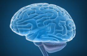Ученые открыли новые неизученные зоны головного мозга