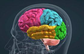 Ученые нашли участки мозга, отвечающие за долговременную память