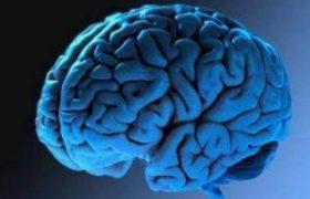 Эффективнее всего мозг работает в тишине