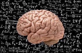 Исследователи нашли «физический движок» мозга