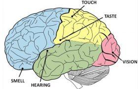 Ученые нашли в мозге центр щедрости