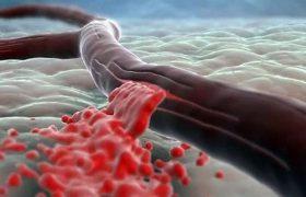 Новое понимание молекулярных уровней приведёт к восстановлению мозга после инсульта
