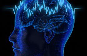 Ученые обнаружили новую часть мозга, связанную со сном и бодрствованием