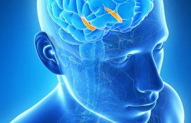 Глубокая стимуляция мозга приводит к образованию новых нервных клеток