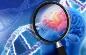 Лишний вес «сушит» мозг