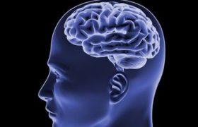 Обнаружены гены, влияющие на размер мозга