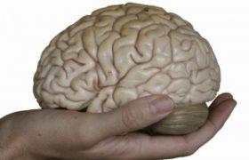 Ученые создали из кожи искусственный мозг