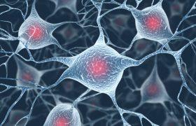 Ученые создали клетки мозга из кожи