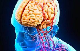 Российские ученые обучат население предотвращать болезни мозга