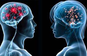 Ученые нашли в мозге мужчин и женщин новые различия