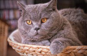 Кошки спасают хозяев от инфарктов и инсультов