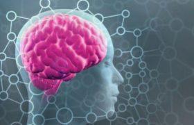 Можно ли сравнивать мозг человека с компьютером?