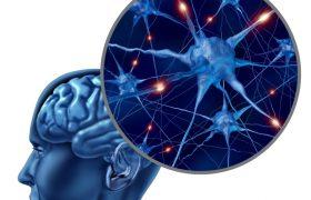 Компьютерный тренинг защитит от развития возрастного слабоумия