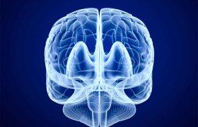 Сканирование мозга показало, почему женщины склонны к многозадачности